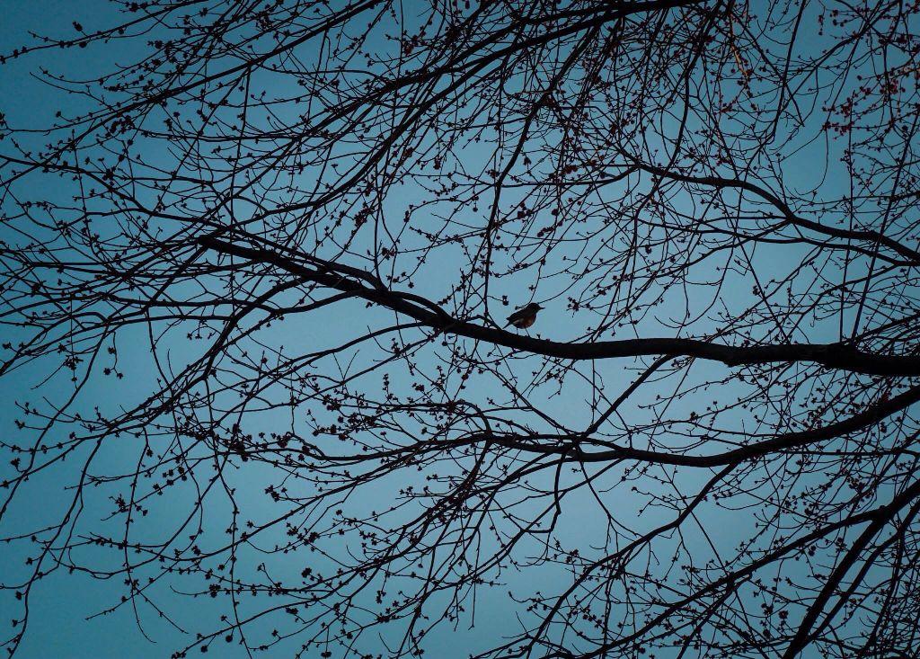 dusk.  #wildlife #birds #nature #trees