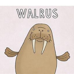 animal walrus