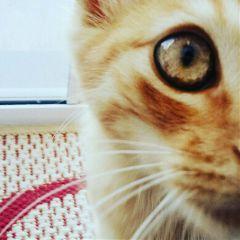 cat eyes petsandanimals photography cute