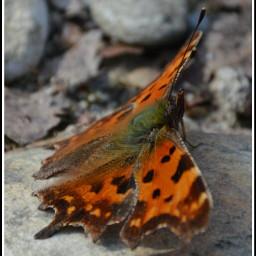 nature freetoedit photography petsandanimals spring