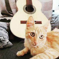 cats cute petsandanimals guitar music