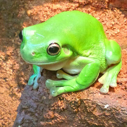 nature petsandanimals photography frog green