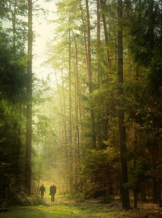 #emotions  #photography  #forest #trees  #lovenature #lovetrees #love