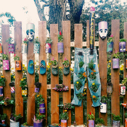 houseplants freetoedit dailyinspiration