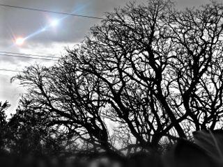 nature blackandwhite hdr tree beautiful