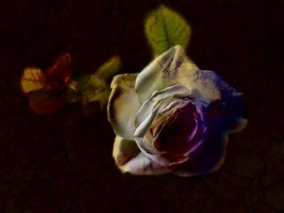 repost flower oldphoto