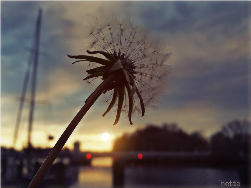 good night everyone... 😊🌜✨ #sunset #twilight #river #bridge #sailboat #inspiration