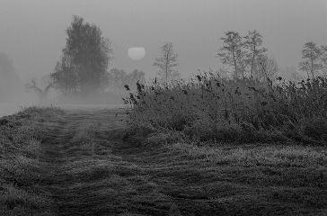 blackandwhite photography nature