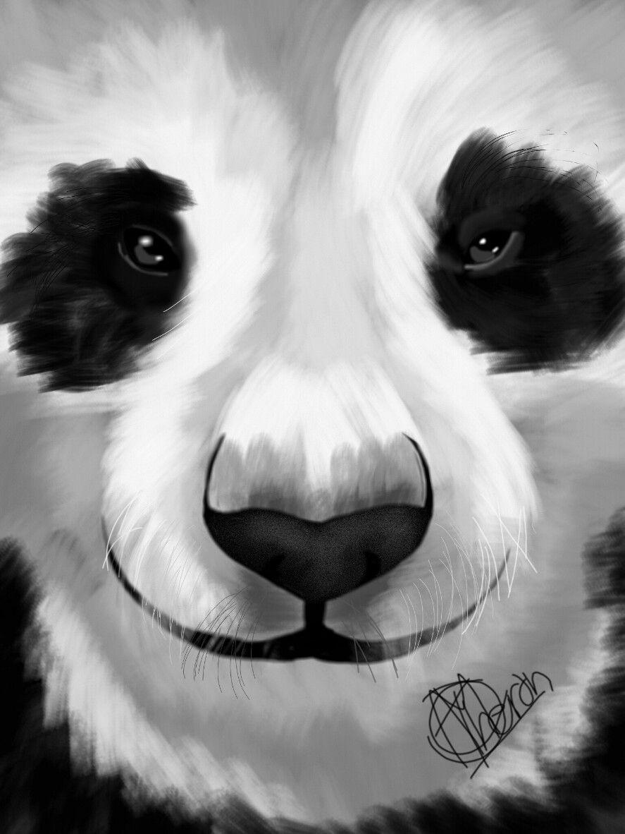 #wdpzooanimals #panda #blackandwhite  #petsandanimals