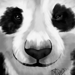 wdpzooanimals panda blackandwhite petsandanimals