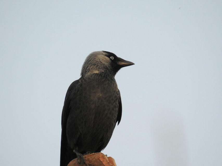 #bird #freetoedit