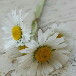 photography nature flower freetoedit bokeh emotions spring