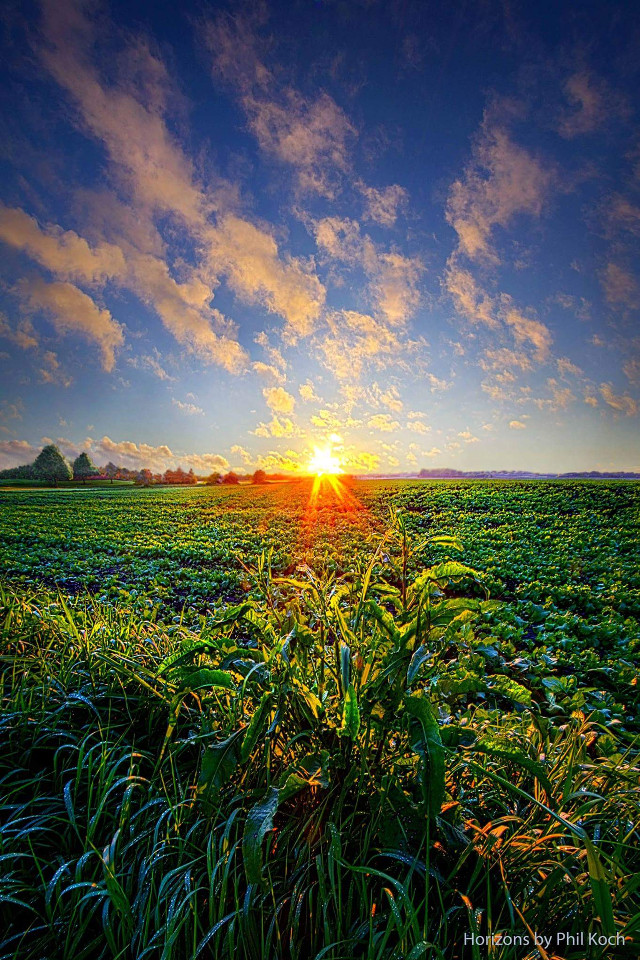 """"""" I Don't Live To Be """" - Wisconsin Horizons by Phil Koch. #colorful #nature #photography #hdr #spring #travel #rural #country #canon #mood #peace #farming #sunrise #weather #green #outdoors #inspiration #goodmorning #Light"""