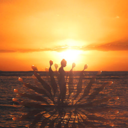 freetoedit edited sunset souls seabeach