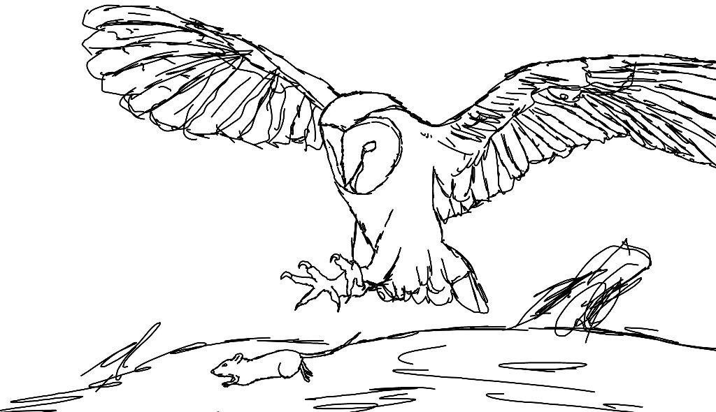 starting a drawing of an owl web references used drawing