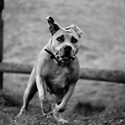 dog mypet mydog black animals