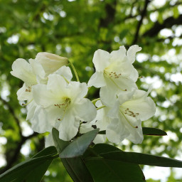 wppnature nature flower green nofilter