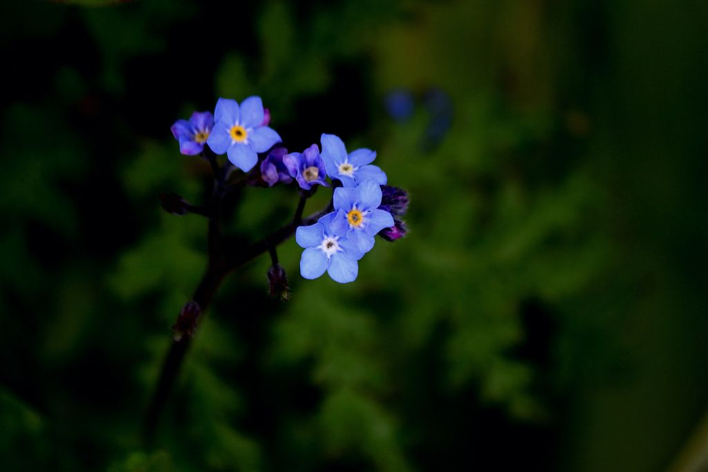 #nature #flowers #outandabout #adjusttool #photography