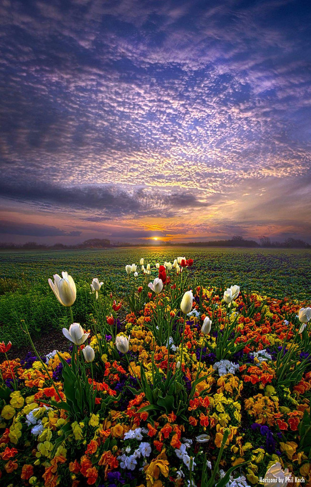 """"""" The Sun Kissed the Morning """" - Wisconsin Horizons by Phil Koch.   #colorful #flower #nature #photography #hdr #emotions #travel #spring #canon #country #rural #mood #peace #sunrise #green #outdoors #goodmorning #Light #Clouds #tulips #garden #flowers"""